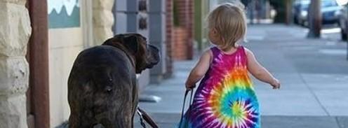 como-passear-cachorro