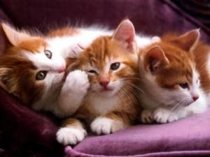 fotos-do-gato