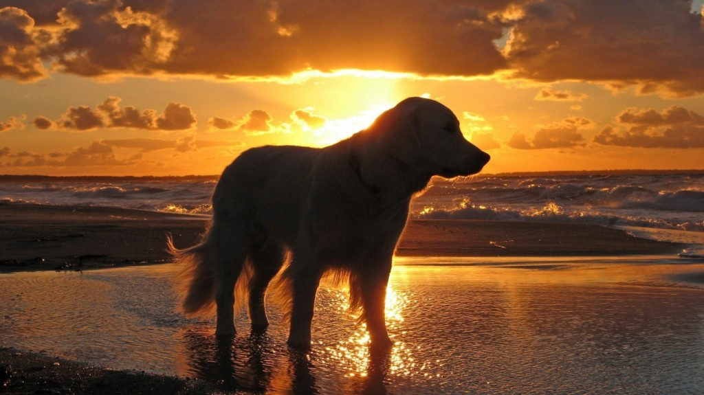 1366_The-Dog-at-Sunset