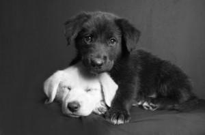 amor-canino-01