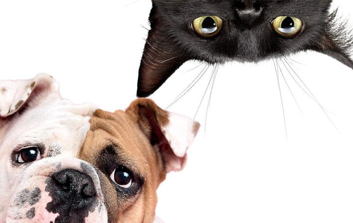 cachorro-e-gato-podem-viver-juntos