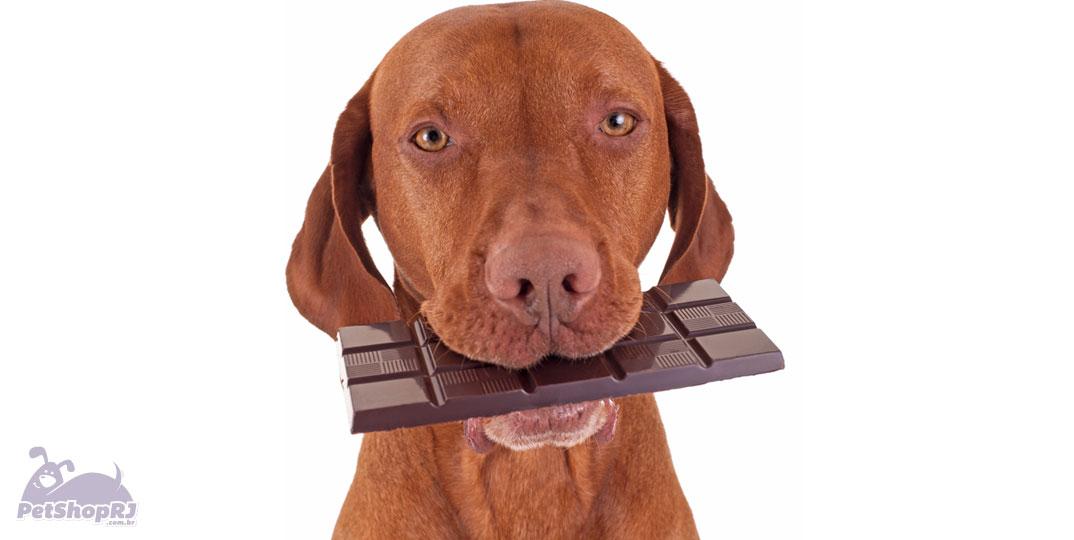 Chocolate-pode-causar-intoxicacao-nos-pets
