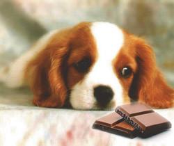 caochocolate