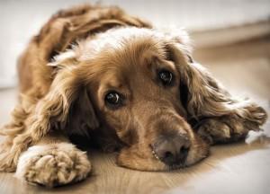 x7-sinais-de-cancer-nos-cachorros02-thumb-570.jpg.pagespeed.ic.xXTNeROzTV