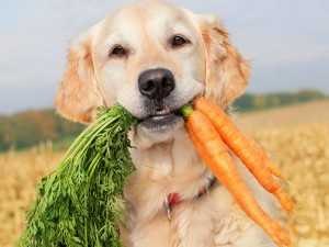 cachorro-pode-comer-cenoura