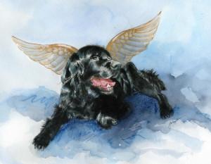 eutanasia-cachorro
