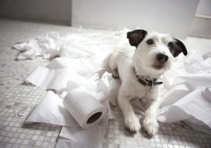cachorro-destroi-casa-5009