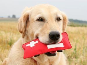 primeiros-socorros-cachorros-saude1-300x225