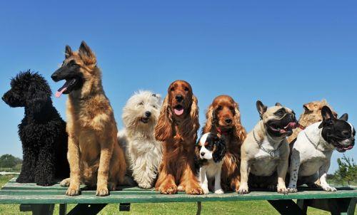 cachorros-felizes-500x302