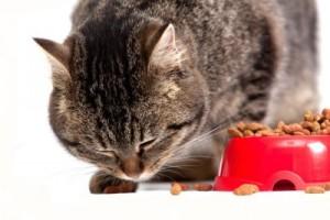 gato-comida-racao-seca-umida-enlatada-400x266