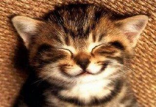 Bichinho - Gato Feliz