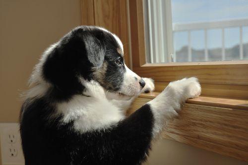 cachorro-sozinho