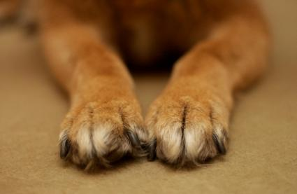 pata-cachorro-02