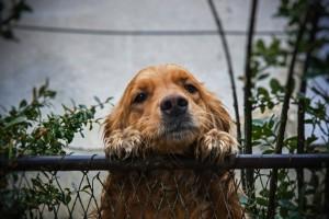 cachorro-fugir-2-766x511